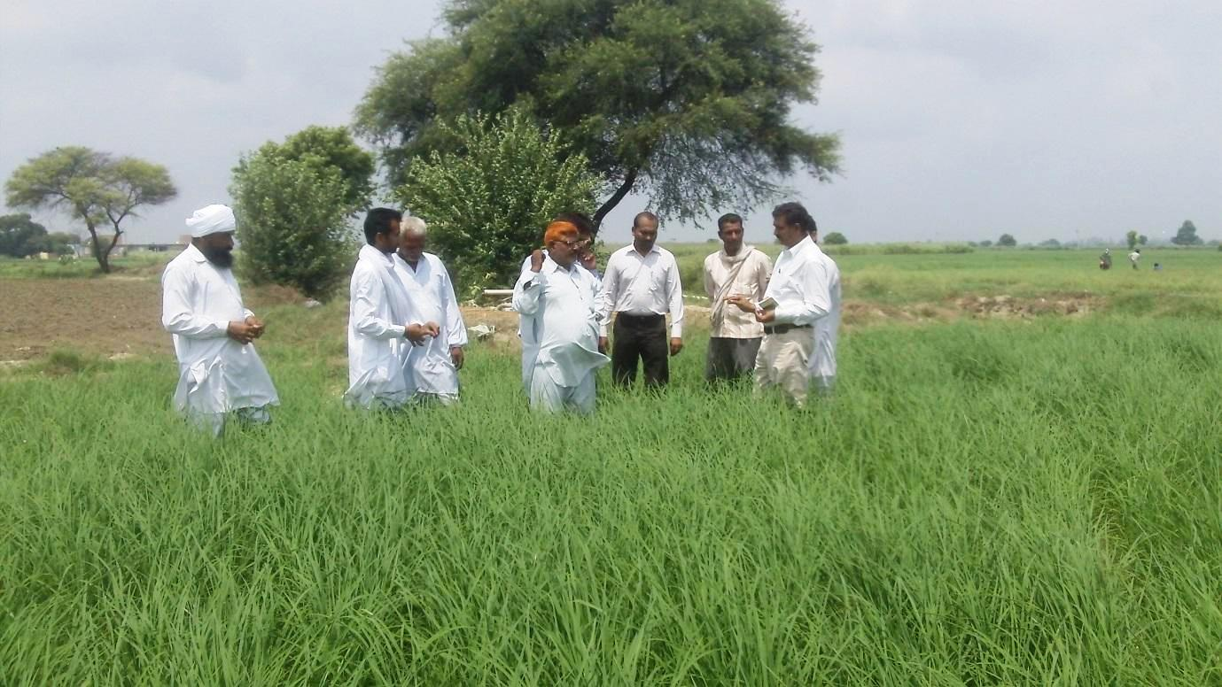 Cereal Systems Initiative for South Asia (CSISA