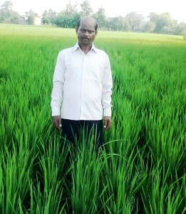 Satyadev Prasad in his machine transplanted paddy field